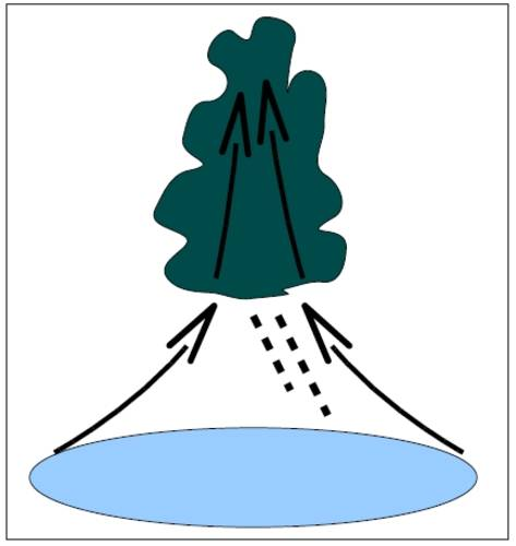 Figure 1. Schematic diagram of a precipitating convective cloud. Water vapour from the sub-cloud area is drawn into the base of the cloud by the convective storm dynamics and low level convergence. In the cloud water vapour condenses into cloud droplets,