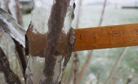 Dikke ijslaag om tak vanwege ijzel. © Jannes Wiersema