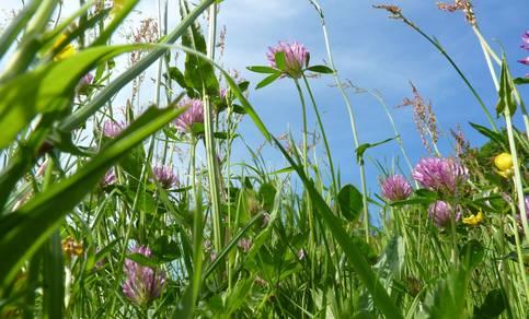 De meeste mensen zijn allergisch voor gras dat bloeit tussen mei en augustus