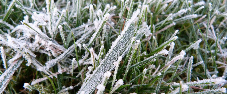 Bevroren gras door vorst