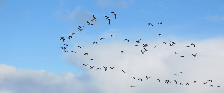 Vogels vliegen door wolkenlucht