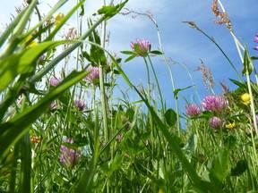 De meeste mensen zijn allergisch voor gras dat bloeit tussen mei en augustus (Bron:Jannes Wiersema).