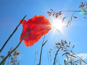 Aan zee zijn het voorjaar en de zomer zonniger dan het binnenland, soms schijnt de zon aan de kust in één enkele maand 100 uur langer dan in het binnenland (Bron: Jannes Wiersema)