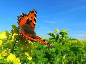 Vlinder in een bloemenveld (Bron: Jannes Wiersema)