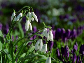 Bloemen in de lente (Bron: Raymond Sluiter)
