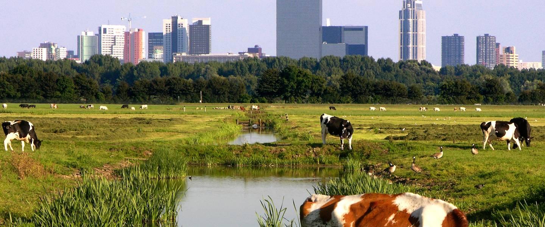 Klimaat van Nederland