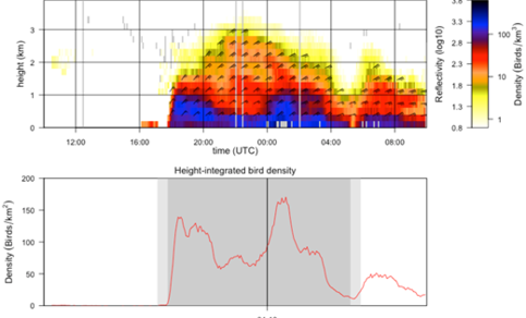 Nocturnal bird migration as seen by the Herwijnen radar