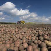 Het rooien van aardappels zal in 2050 later plaatsvinden dan nu.