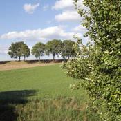 Grassen en bomen zullen in het langere bloeiseizoen rond 2050 voor meer allergiedagen zorgen.