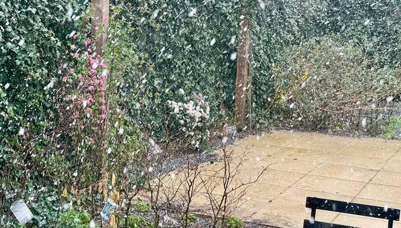 Sneeuw in de lentetuin