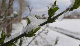 Foto van bloeiende tak met ijs