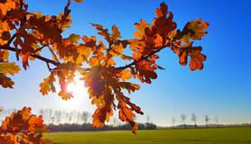 bladeren in de herfst met zon op de achtergrond