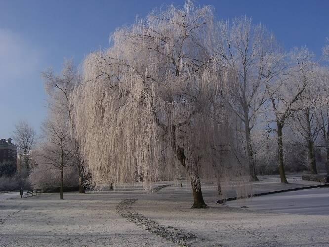 Misting System Winterizing : Knmi winter was koud en duurde lang