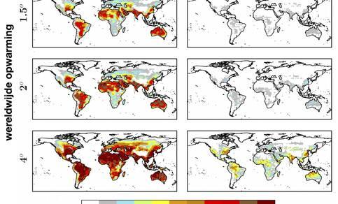 Waarschijnlijkheid per jaar op een hittegolf met een gevoelstemperatuur boven de 40 of 55 graden bij een wereldwijde opwarming van 1,5 en 2 en 4 graden. Waarden boven 55°C zijn levensgevaarlijk. Bron: Russo et al, Scientific Reports, 2017