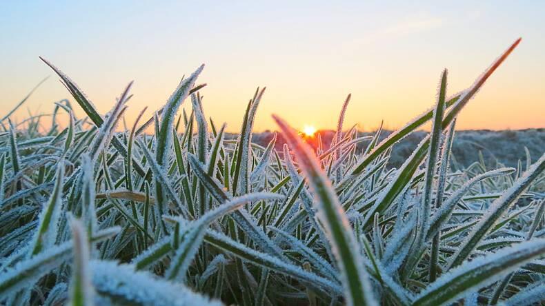 foto van dauw op gras in de winter met opkomende zon