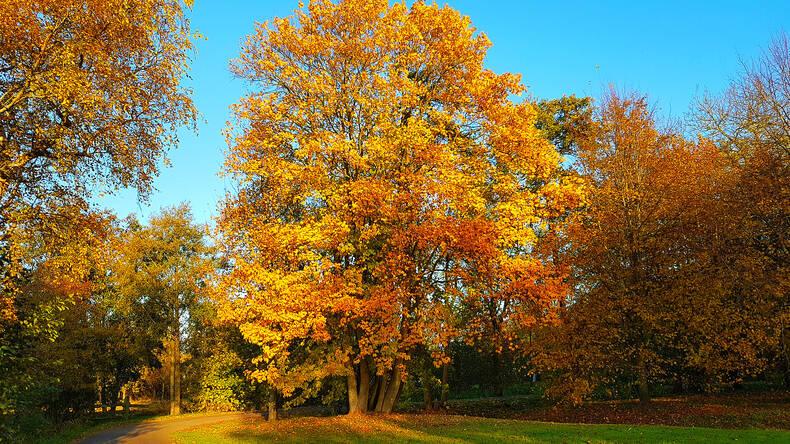 bos met bladeren in herfstkleuren