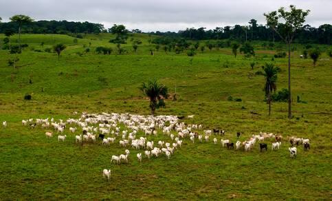 Met name de grootschalige rundvleesproductie in Zuid-Amerika zorgt voor toename van methaan in de atmosfeer. Bron Kate Evans for Center for International Forestry Research (CIFOR)