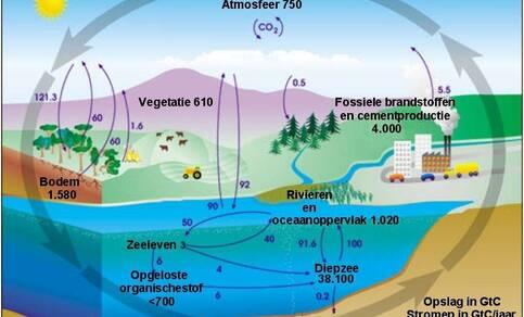 Tekening van de wereldwijde koolstofkringloop.