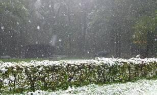 Sneeuw in het Vijlerbosch op 14 oktober 2015 in Limburg. Foto Jan Brouwers L1/Meteo Limburg