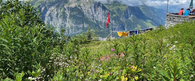 Bloemen bij de Doldenhorn-Hütte