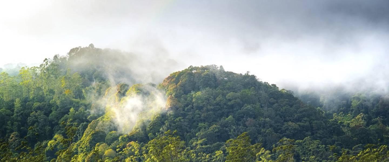 Verdamping boven bos