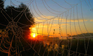 Zonsopkomst met spinnenweb
