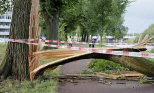 A photo of wind damage that caused a tree to fall over